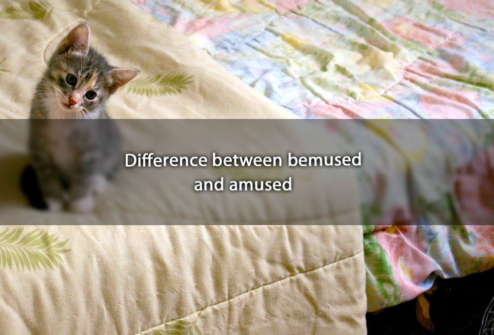 Difference between bemused and amused